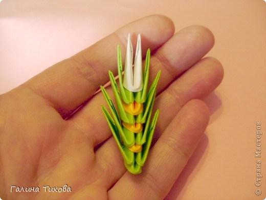 модульное оригами павлин22