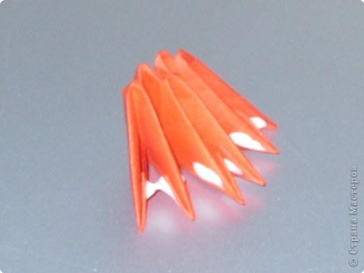 попугай модульное33
