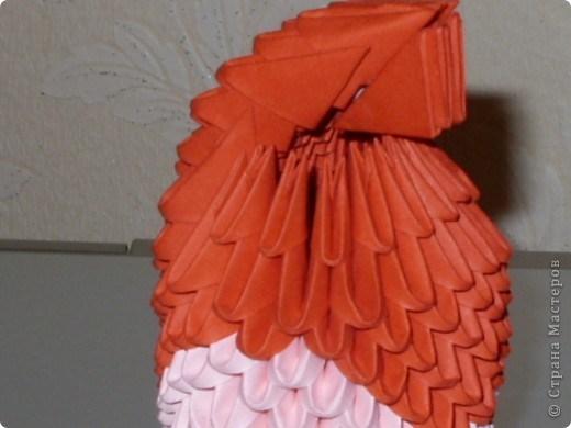 попугай модульное36