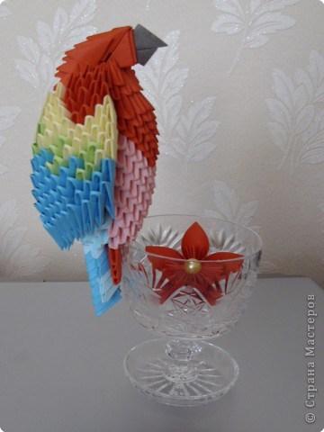 попугай модульное67