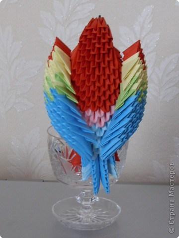 попугай модульное69