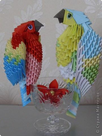 попугай модульное70