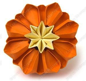 цветущий кактус15