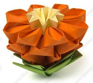 цветущий кактус16