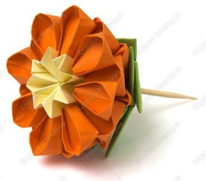 цветущий кактус17