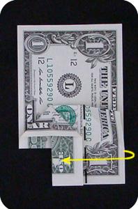 сосна из денег 11