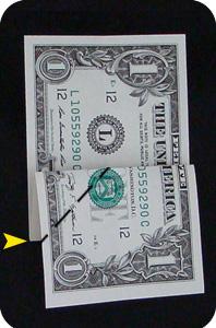 сосна из денег 4