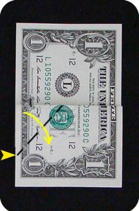 сосна из денег 5