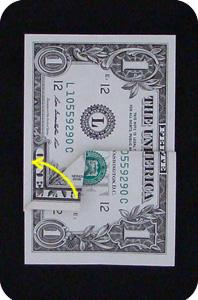сосна из денег 6