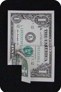 сосна из денег 9