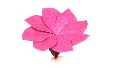 клематис оригами 28