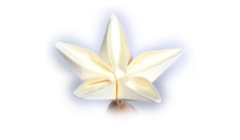 жасмин цветок поделка 34