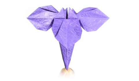 ирис оригами 24
