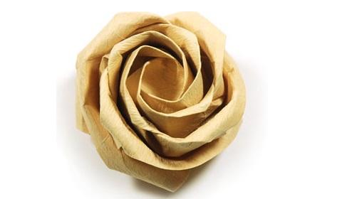 новая роза кавасаки 94