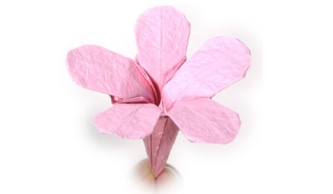 флокс оригами 41