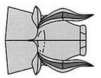 бык 48